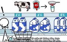 Sữa chính là máu được lọc và những bí mật chưa ai biết về chất lỏng quý giá này
