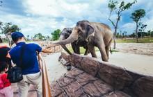 Một vòng khám phá River Safari - Công viên bảo tồn động vật hoang dã trên sông tại Hội An