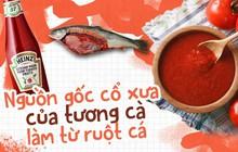 Không phải cà chua, ruột cá mới là nguyên liệu ban đầu của ketchup