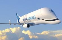 Máy bay đầu to như con cá voi của Airbus có đầy đủ mắt mũi miệng, tên cũng có nghĩa là cá voi luôn!