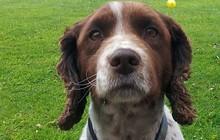 Anh: Chú chó nhỏ trở về với gia đình sau 5 năm bị bắt cóc dù ở cách xa nhà 200 km