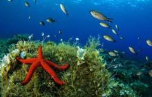 Những bức ảnh tuyệt đẹp về cuộc sống dưới đáy đại dương