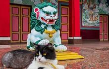Ảnh: Những ngôi đền Phật giáo đẹp đến ngỡ ngàng ở Nga