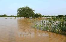 Mực nước sông Hồng tại Hà Nội sẽ lên nhanh, cảnh báo nguy cơ ngập lụt