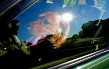 Để chó trong ô tô khi trời nóng - đây là sự thật khủng khiếp sẽ xảy ra