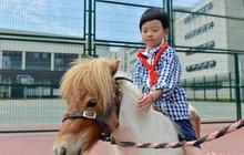 Để tạo hứng thú học môn Sinh, 1 trường tiểu học ở Trung Quốc đã nhập hẳn 2 con ngựa từ Anh về nuôi