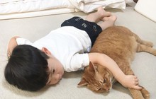 """Câu chuyện hai con mèo và hai đứa trẻ khiến MXH dậy sóng: Đừng bao giờ nói """"trẻ con có biết gì đâu!"""""""