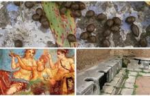 Những sự thật khó tin về cuộc sống của người La Mã cổ: đánh răng bằng nước tiểu, ăn no quá được nôn luôn tại bàn
