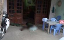 Khởi tố vụ án xả súng bắn chết hai vợ chồng ở Điện Biên