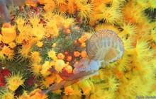 Lần đầu tiên ghi được cách san hô săn mồi: Đánh hội đồng và xả thịt sứa biển
