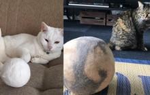 """Nuôi mèo nhiều năm tiện tay gom lông rụng, các sen trên MXH cùng khoe những trái """"bóng lông"""" khổng lồ to tới khó tin"""
