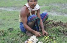 Một mình trồng cây 40 năm, biến đất cằn thành cánh rừng