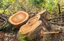 Nghịch lý: Diện tích cây xanh trên toàn cầu tăng lên đấy nhưng thực tế lại là điều đáng buồn