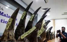 Hải quan Malaysia thu giữ lượng sừng tê giác lớn nhất từ trước tới
