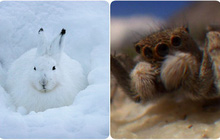 Những cao thủ sinh tồn trong thế giới động vật - vẫn sống sót khi thời tiết điên rồ nhất