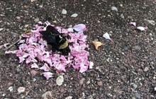 Video khiến công đồng mạng bất ngờ: bầy kiến đặt vòng hoa quanh xác con ong - có phải chúng ta làm nghi lễ tiễn đưa như trong phim?