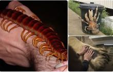 Những bức hình sẽ giúp bạn hiểu thế giới tự nhiên ngập tràn các loài vật khổng lồ mà bản thân không nhận ra