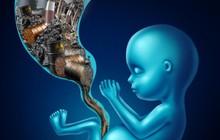 Lần đầu tiên tìm ra dấu vết ô nhiễm không khí gây ảnh hưởng đến nhau thai
