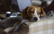 Chuyên gia cho biết, cún nhà bạn sẽ rất buồn nếu chủ của chúng suốt ngày dán mắt vào màn hình điện thoại