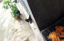 """Câu chuyện """"cô gái nướng thịt và 3 con boss hàng xóm"""" khiến dân mạng mát lòng mát dạ những ngày nóng nực"""