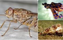 """6 sát thủ """"nhỏ nhưng có võ"""" của tự nhiên: có cả loài giết người nhiều nhất trong lịch sử"""
