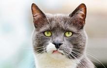 Tại sao lũ mèo luôn tỏ ra khinh thường loài người? Nếu bạn nghĩ như vậy thì hơi oan cho boss đấy