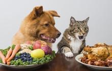 Xu hướng cho chó ăn chay hoàn toàn trên thế giới và chuyện gì sẽ xảy ra?