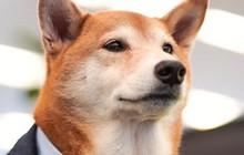 """Ảnh: Chó thời trang Bodhi cực """"ngầu"""" với mức lương 15.000 USD/tháng"""