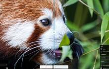 Ứng dụng web mới của Google giúp bạn nén ảnh kích thước lớn mà không làm giảm quá nhiều chất lượng
