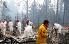 Thiệt hại do cháy rừng ở Mỹ: 50 người chết, 228 người vẫn còn mất tích