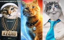 """Bớ người ta, thú cưng sắp chiếm lĩnh cả nền điện ảnh rồi, """"con sen"""" toàn thế giới hãy coi chừng!"""