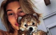 """Ôm chú cún nhỏ lắc lư liên tục, vợ Justin Bieber ăn cả """"rổ gạch"""" vì bạo hành động vật"""