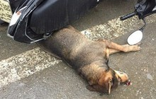 """Hà Tĩnh: Chó """"điên"""" làm náo loạn cả khu chợ trung tâm thương mại thị trấn, cắn bị thương hàng chục người"""