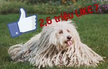 """Facebook này kiếm 2 triệu Like chỉ nhờ vài ảnh """"chổi lau nhà"""" mỗi năm, lý do đằng sau chẳng ai ngờ tới được"""