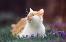 Chùm ảnh về chú mèo không mắt nhưng biết nhìn ngắm cuộc đời bằng cả trái tim