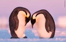 Loạt đề cử ấn tượng cho giải thưởng nhiếp ảnh thế giới hoang dã của năm do Bảo tàng Lịch Sử Tự Nhiên lựa chọn