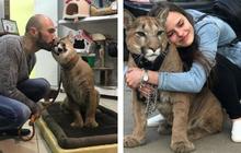 Chú báo sư tử được đôi vợ chồng Nga rước về nuôi rồi trở thành 'hot pet' đình đám trên MXH