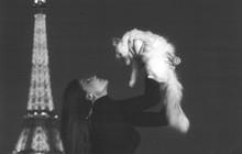 """Chẳng phải ai khác, mèo Choupette mới chính là """"nàng thơ"""" nổi tiếng nhất của Karl Lagerfeld với vẻ đẹp vừa sang chảnh lại ngọt ngào"""