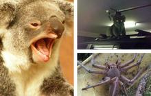 Chùm ảnh chứng minh việc sinh tồn ở miền hoang dã nước Úc là một thử thách cho bất kì ai