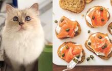 """Khám phá thực đơn 5 sao của cô mèo Choupette giàu nhất thế giới, có món mà """"thường dân"""" chúng ta có khi còn chưa ăn bao giờ"""