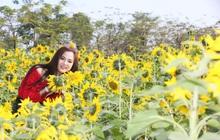 """Gần 15.000 cây hoa hướng dương đồng loạt """"bung lụa"""" trong Lễ hội hoa xuân ở Sun World Halong Complex"""