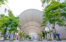 Lạc vào khung cảnh thơ mộng của trường Đại học Thăng Long