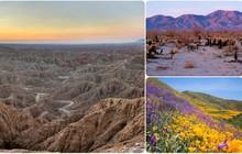 """Choáng ngợp trước hiện tượng hoa """"siêu bung nở"""" cực hiếm gặp, khiến cả sa mạc như sống dậy"""