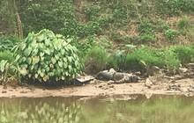 Hà Nội: Phát hiện thi thể đang phân hủy trên sông Nhuệ
