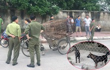 Một nữ lao công ở Hà Tĩnh bị chó tấn công tổn thương nặng phần đầu