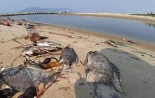 Cá chết hàng loạt, bốc mùi hôi thối ở bãi biển Đà Nẵng do nước xả thải