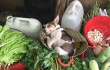 Hình ảnh em cún theo mẹ ra chợ bán rau nhưng ngủ lăn quay được thả tim rần rần vì đáng yêu quá xá