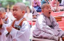 Loạt sắc thái đáng yêu hết nấc của các chú tiểu trong ngày xuống tóc đón lễ Phật Đản ở Hàn Quốc