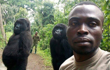 Ham chụp tự sướng với các chú kiểm lâm, 2 'cô' khỉ đột bỗng chốc nổi như cồn khắp thế giới