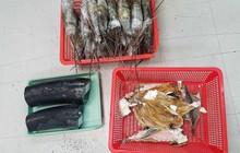 Gần 10kg ngà voi được nguỵ trang trong thùng hàng chứa tôm hùm, cá khô